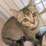 🐈2月1日よりノラ猫不妊手術の受入ルールを改定致します🐈