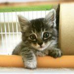 🐈子猫の里親さんを募集します🐈