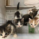 🐈子猫4匹の里親さんを募集します🐈