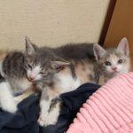 🐈子猫3匹の里親さんを募集します🐈