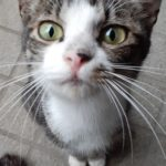 🐈成猫3匹の里親さんを募集します🐈