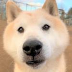 🐶セラピー犬の里親さんを募集します🐶