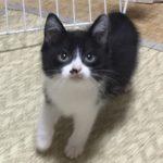 🐈子猫の里親さんを募集いたします🐈