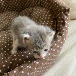 🐈子猫(生後1か月以内)の里親さんを募集します🐈