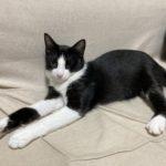 🐈子猫(生後11か月)の里親を募集します🐈