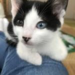 🐈子猫(生後2か月)の里親さんを募集いたします🐈