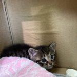 🐈子猫(生後2か月)の里親さんを募集します🐈