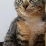 🍀猫ちゃん探しています🍀