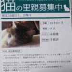 🐈成猫の里親さんを募集します🐈