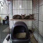 🐈子猫(2-3カ月)とお母さん猫の里親さんを募集します🐈