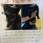 🐈子猫(1~2ケ月)の里親さんを募集します🐈