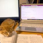 📚子猫のひとりごと ぼくのお腹に住んでた虫さん「コクシジウム」📚