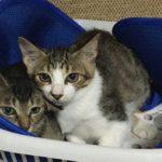 🐈子猫2匹(生後4ヶ月)の里親さん募集します🐈