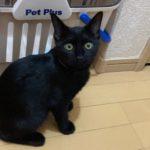 🐈子猫(生後4~5ヶ月)2匹の里親さんを募集します🐈