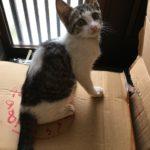 🐈子猫(生後3ヶ月)の里親さん募集します🐈