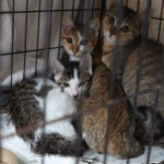 🐈子猫3匹(生後3~4ヶ月)の里親さん募集します🐈